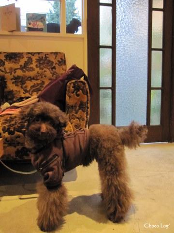 choco 2011.10.19-4.jpg