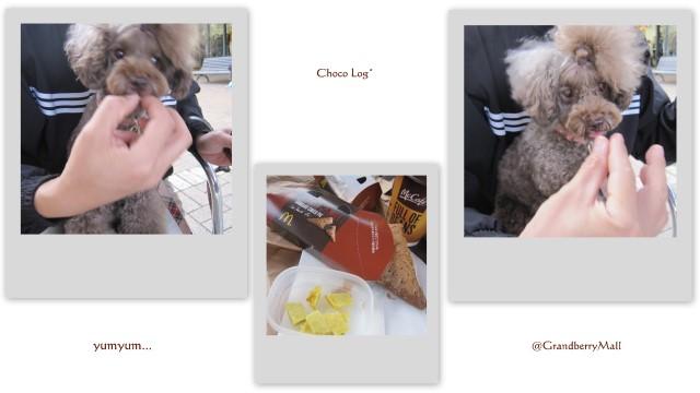 choco 2011.10.9-1.jpg