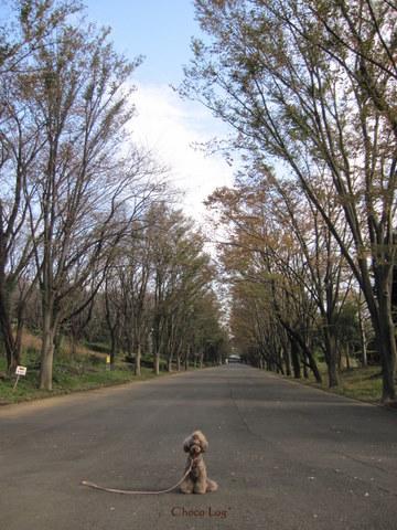choco 2011.11.18-1.jpg