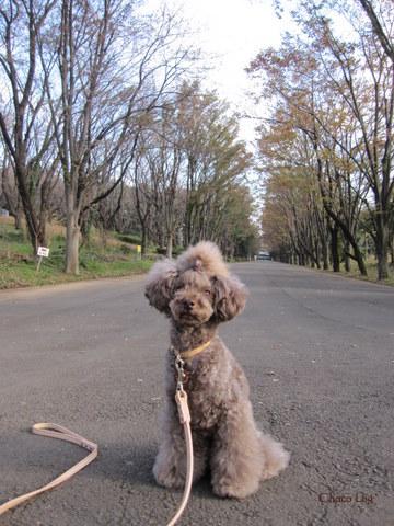 choco 2011.11.18-2.jpg