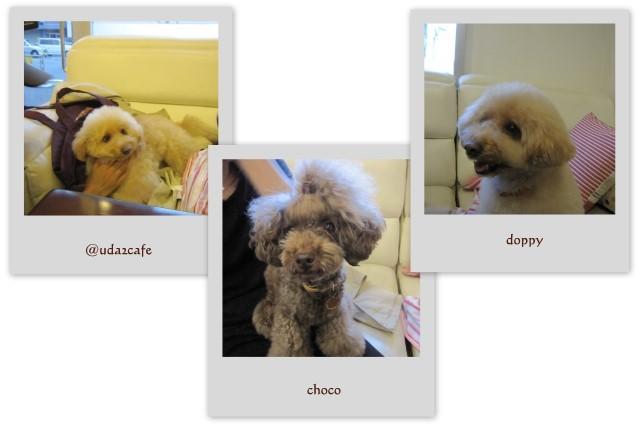 choco 2011.11.23-4.jpg