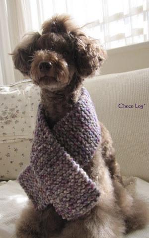 choco 2011.11.25-1.jpg