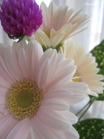 choco 2011.9.27-1.jpg