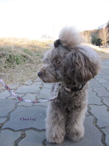 choco 2012.1.7-2.jpg