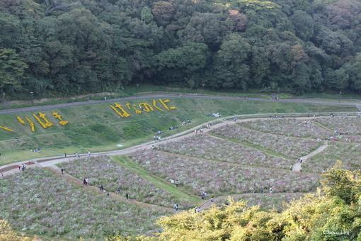 choco 2012.10.21-21.jpg