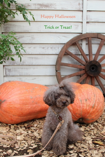 choco 2012.10.31-1.jpg