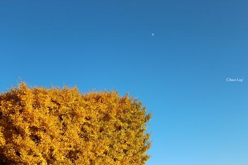 choco 2012.11.21-8.jpg