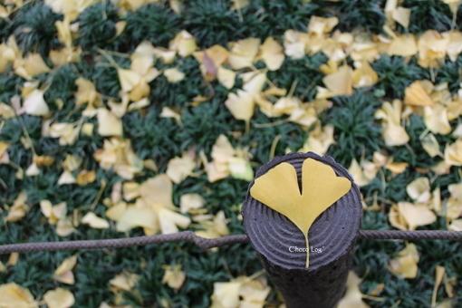 choco 2012.11.28-2.jpg
