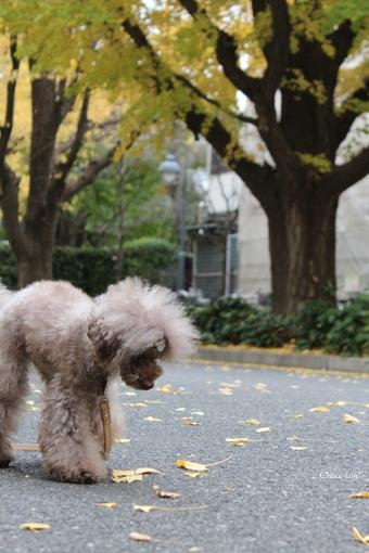choco 2012.11.28-5.jpg