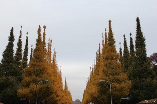 choco 2012.11.28-8.jpg