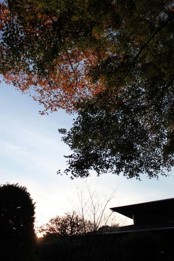 choco 2012.11.4-6.jpg