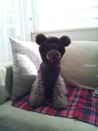 choco 2012.12.13-1.jpg