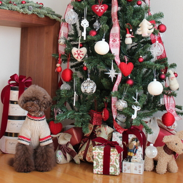 choco 2012.12.19-15.jpg