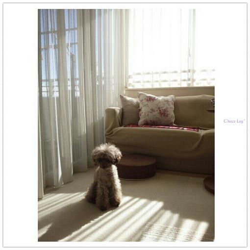 choco 2012.12.7-2.jpg