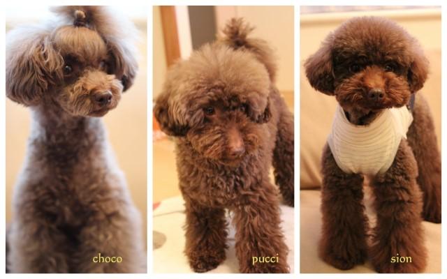 choco 2012.2.16-2.jpg