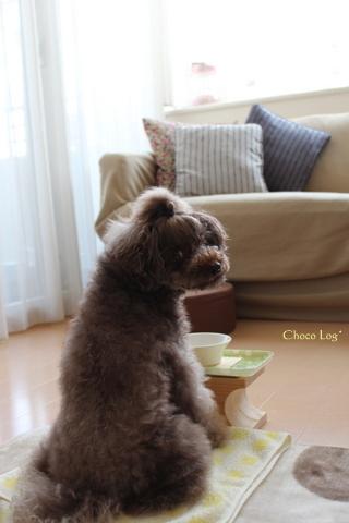 choco 2012.4.17-1.jpg
