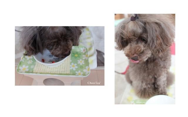 choco 2012.5.25-4.jpg