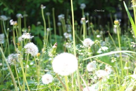 choco 2012.5.5-8.jpg