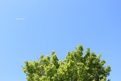 choco 2012.5.5-9.jpg
