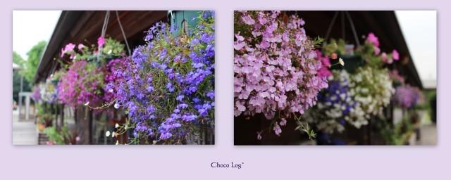 choco 2012.6.11-3.jpg