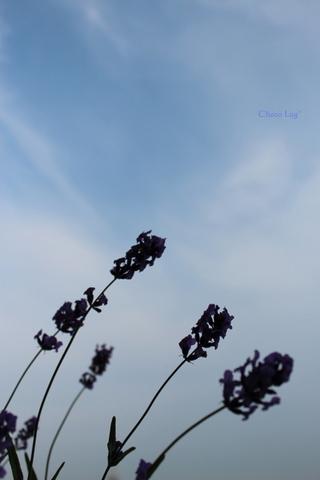choco 2012.6.17-4.jpg