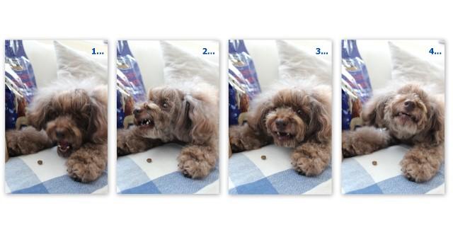 choco 2012.7.19-1.jpg