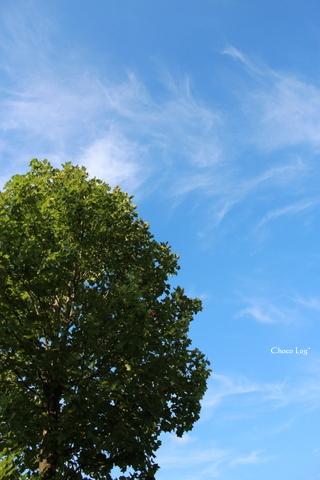 choco 2012.8.14-1.jpg