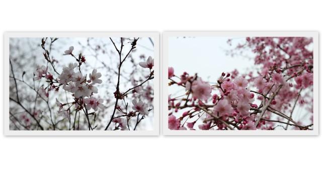 choco 2013.3.29-5.jpg