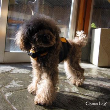 choco 2011.1.22-1.jpg