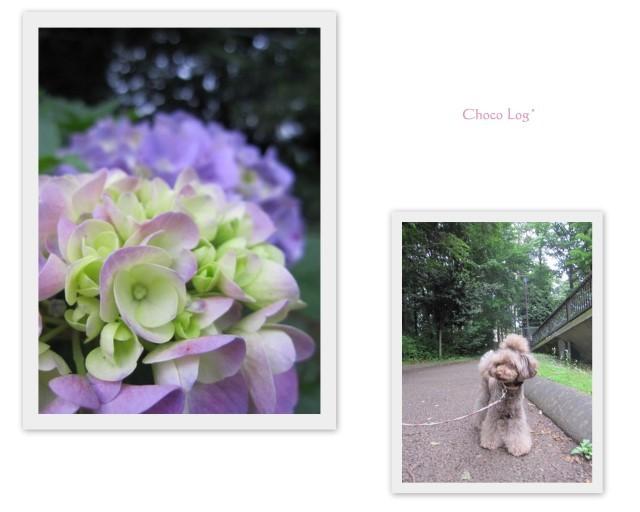 choco 2011.6.12-1.jpg