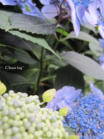 choco 2011.6.26-2.jpg