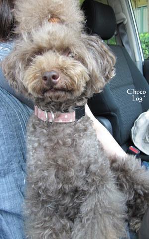 choco 2011.6.29-1.jpg