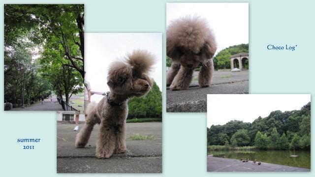choco 2011.8.13-3.jpg