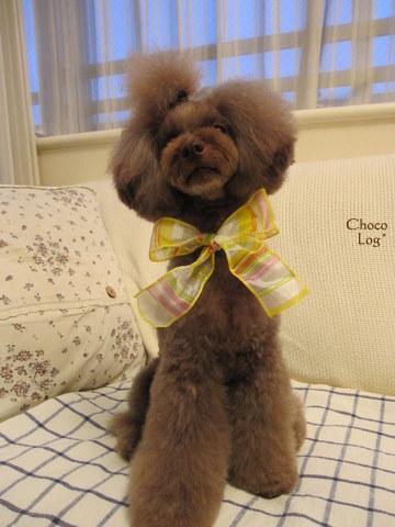 choco 2011.8.9-1.jpg