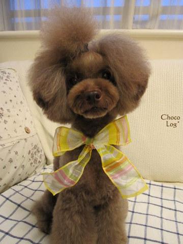 choco 2011.8.9-2.jpg